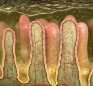 <span>gastrointestinal tract SBoulardii</span><i>→</i>